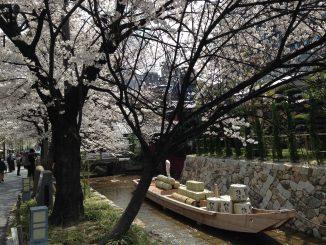 【京都の桜情報】京都人が「オススメのBEST10」ランキング。穴場もあります!!